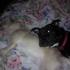 Heidis Legacy Dog Rescue Inc