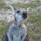 Fallin Pines Critter Rescue - Christmas, FL
