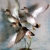 Whistling Wings Avian Taxidermy