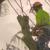 Smith Tree Care Experts LLC
