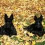 Bark & Purr