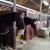 Rockmeadow Equestrian Center