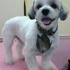 Glitter Groomer Las Vegas Henderson Dog Grooming