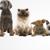 Barkshire Pet Care Center