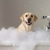 The Barkley Pet Hotel and Day Spa