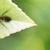 George Termite & Pest Control