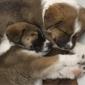 Pet Network Humane Society - Incline Village, NV