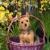 Tinibaybeez Dog Grooming