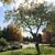 Integrity Tree Solutions LLC