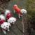 One Good Dog! Professional Dog Training