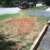 All Stump Removal