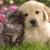 Madison Pet Clinic