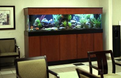 Affordable Aquarium Service - San Mateo, CA