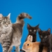 Pine Banks Animal Hospital & Kennels