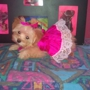 Orlando Humane Society SPCA Of Central Florida