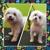 Happy Pets Hotel & Jen's Paw-fect Dog Salon
