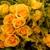 Q Garden Design - Garden Weddings