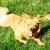 Shaggy Dog Pet Grooming
