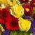 Creative Flowers Under The Arbors Edge