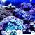 Aquatic Life (Aquatic Supply) - CLOSED