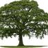 A-1 Brosch Tree Service Inc