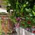 Herbal Fairy Wellness Spa
