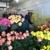 Schaaf Floral