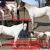 POUNDS All Natural Horse Feed Supplement