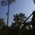 Spartan Construction & Tree Service