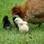 Western Ranch & Pet Supply