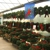Koetsier's Greenhouse