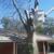 Falling Timbers Tree Service