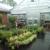 Treeland Garden Center & Nursery