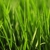 Green Acres Lawn Care