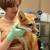 Your Pets Animal Hospital