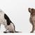 Ohio County Animal Clinic PLLC