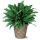 1-800-USA-SEND PLANTS