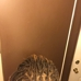 Bindu African Hair Braiding