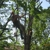 A & M Tree Service & Stump Grinding