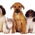 Best Friends Pet Clinic