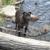 Tahoe Pet Sitters