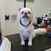 Scissors n Sudzs Pet Salon LLC - CLOSED