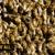 ABC Pest Control & Wildlife