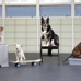 San Francisco SPCA Dog Training