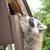 Hudson wildlife removal