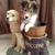 Hug N Pups