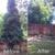 Urban Arborists Tree Service