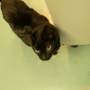 VCA Sno-Wood Animal Hospital