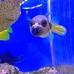 Alamo Aquatic Pets