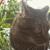 Curious Tails Pet Sitting